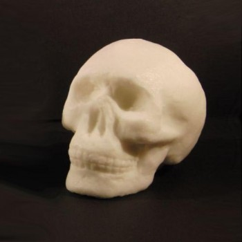 Yorick ~ a Skull