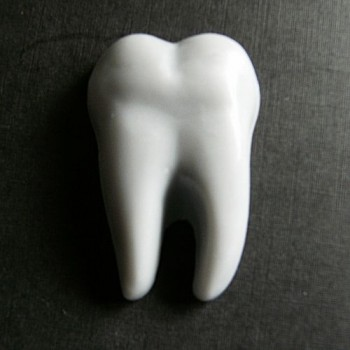 Tooth (x 2)